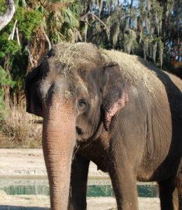are-you-an-elephant